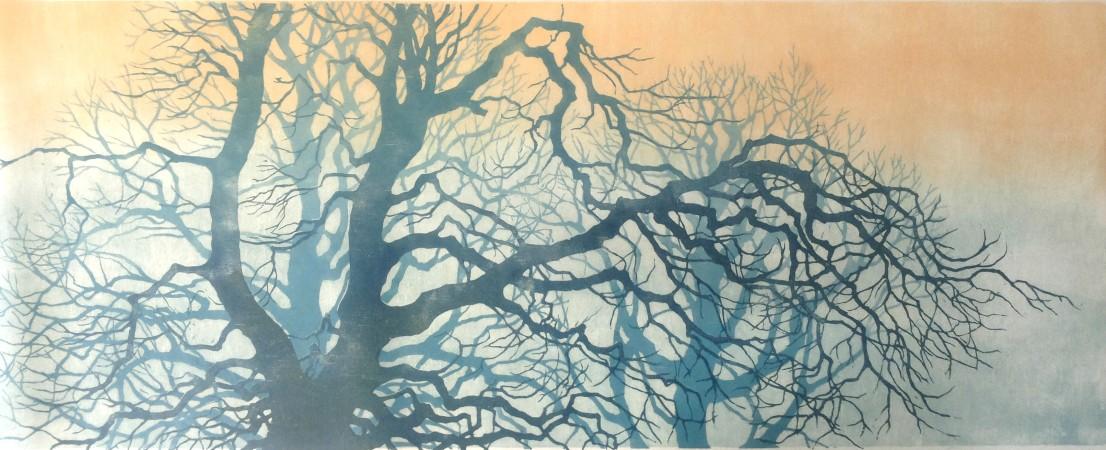 Bomen in ochtendlicht